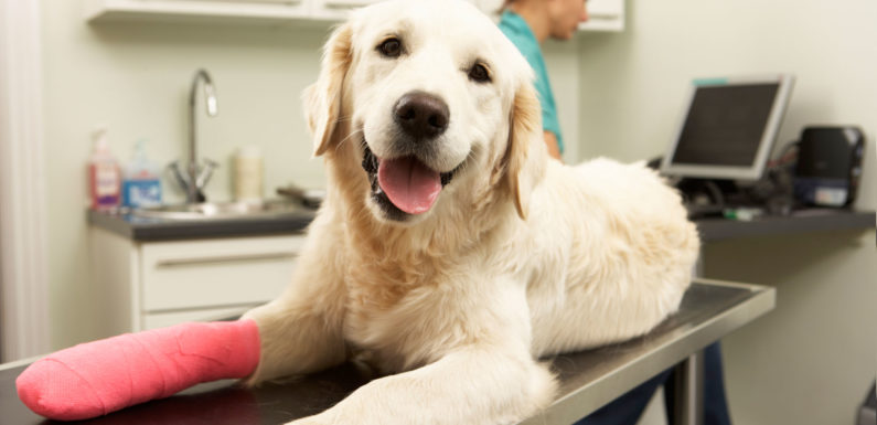 Inexpensive Pet Insurance coverage – Get a Low Value Pet Insurance coverage Quote