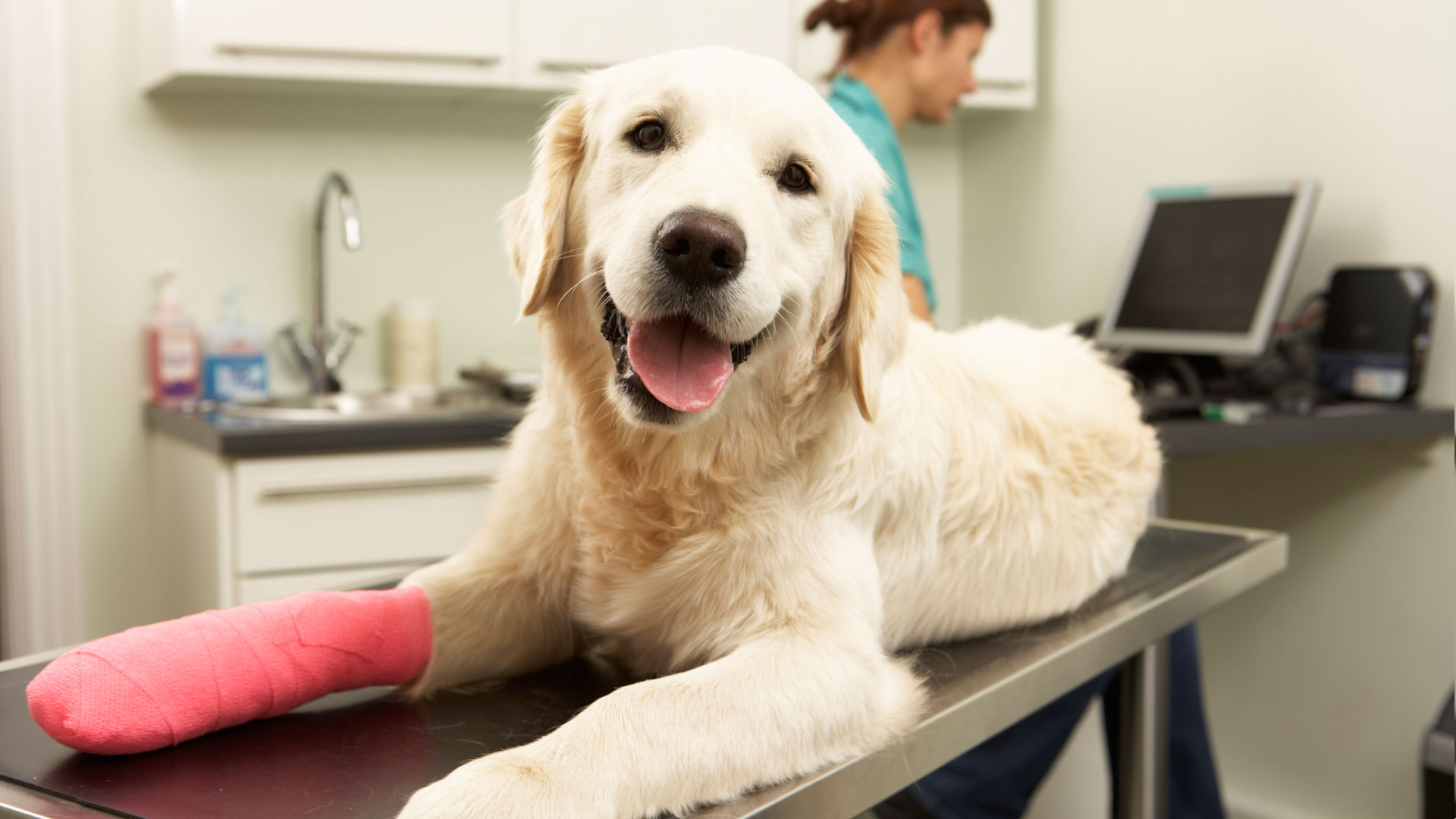 Affordable Pet Insurance - Get a Low Cost Pet Insurance Quote