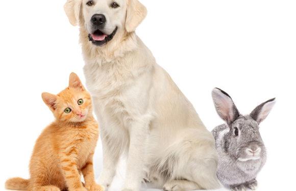 Cat Insurance coverage