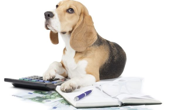 How A lot Does Pet Insurance coverage Value?