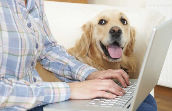 Tips on how to Discover Inexpensive Pet Insurance coverage