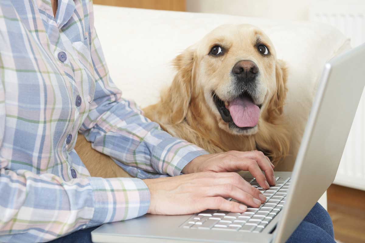How to Find Affordable Pet Insurance