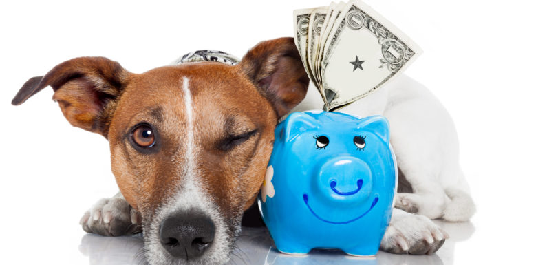 The way to Get a Pet Insurance coverage Quote
