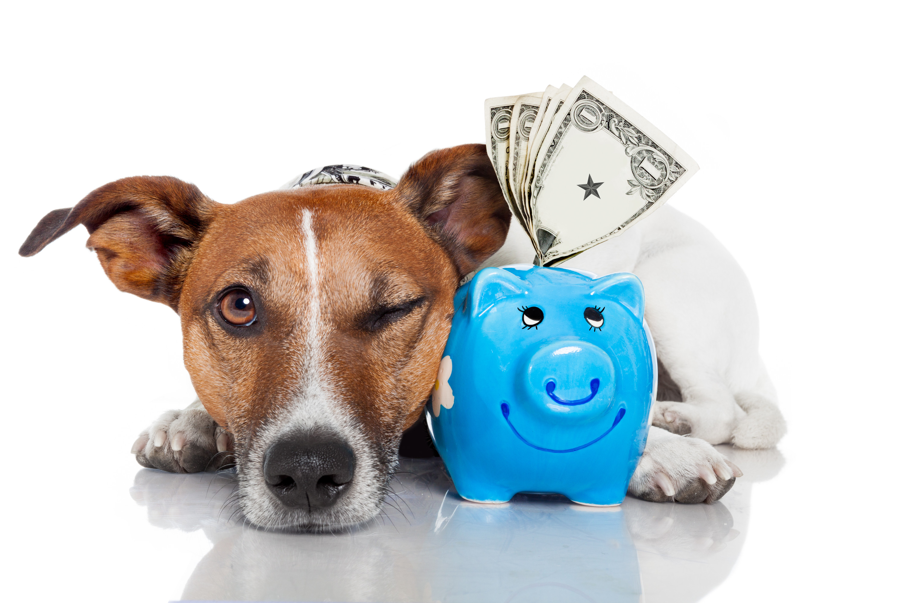 How to Get a Pet Insurance Quote