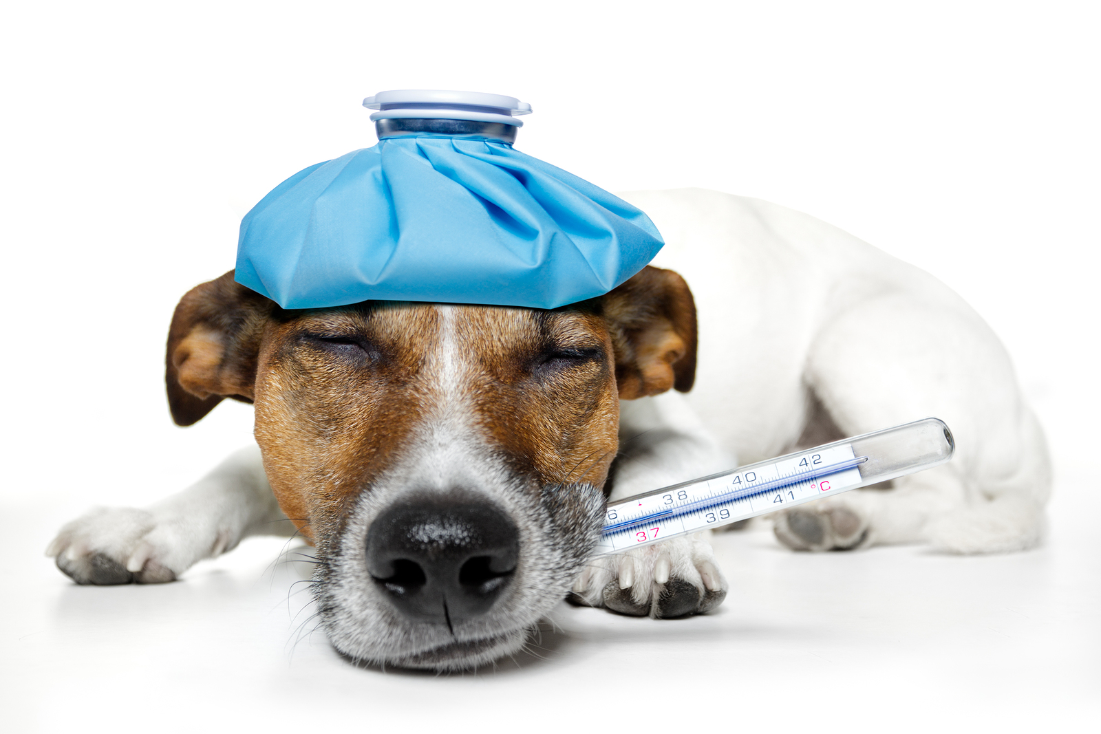 Pet Health Care Coverage - The Importance of Pet Health Care Coverage For Your Pets