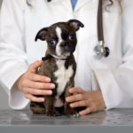 Tips For Buying the Best Pet Health Insurance Policy